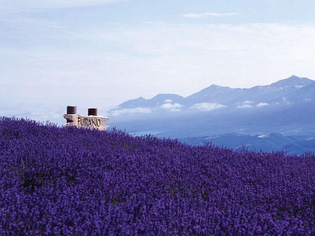 lavender tomita-01