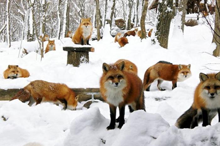 fox-village