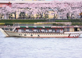 1 Day Tokyo Best Sakura & Sumida Night River Cruise Tour By Sunrise Tours