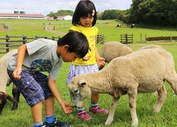 Mother Farm - Chiba