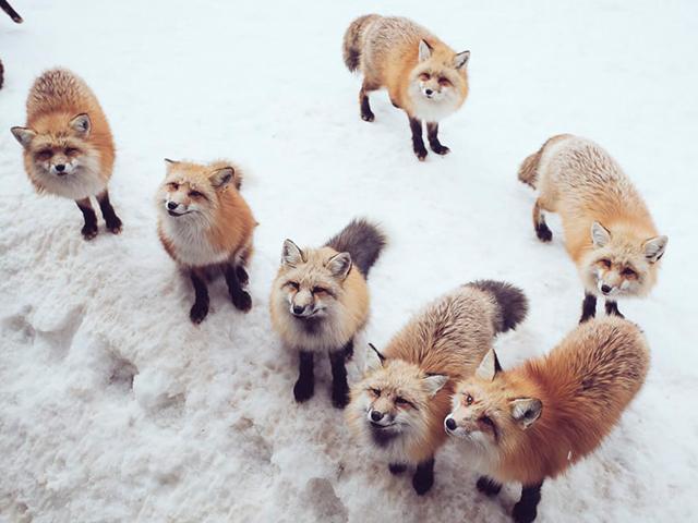 Miyagi Fox Village3