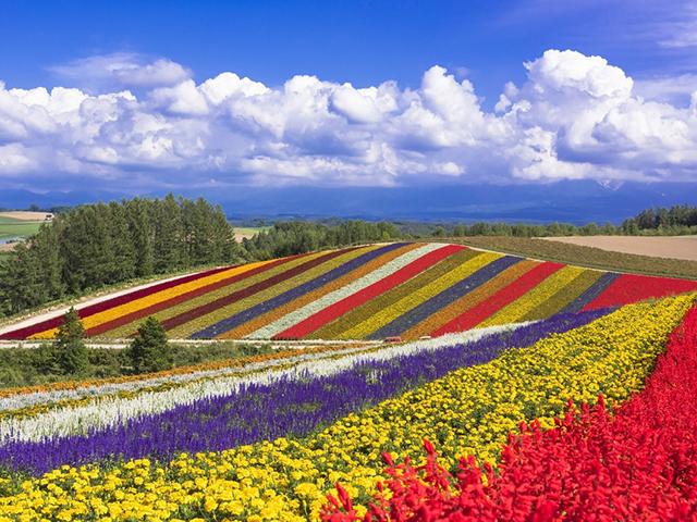 Shikisai Hokkaido
