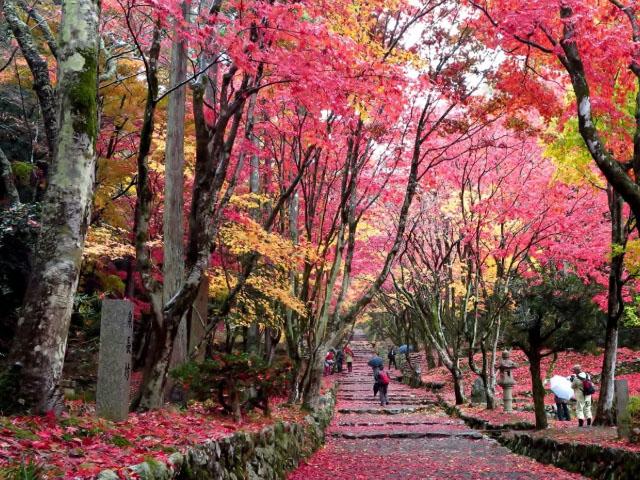 Keisokuji Temple Wander